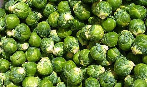 Урожай брюссельской копусты