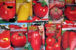 Разновидности сортов помидор