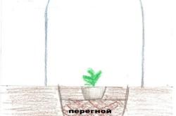 Как вырастить дыню: секреты и особенности