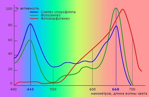 На рисунке показано поглощение света хлорофиллом.