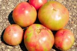 Побурение томатов