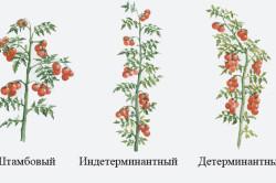 Виды формирования куста томатов