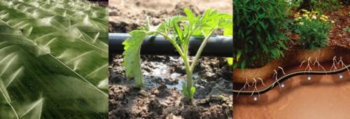 Виды искусственного полива: дождевание, капельный полив, внутрипочвенный полив