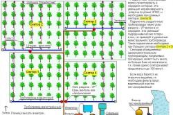 Пример размещения системы капельного полива на участке