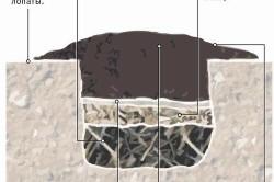 Схема формирования теплой грядки