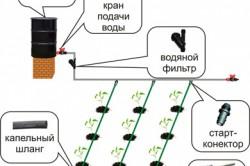 Схема капельного полива подведенного к лункам растений