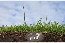 Кислотно-щелочной баланс почвы