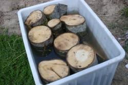 Древесные отрезки для выращивания вешенок