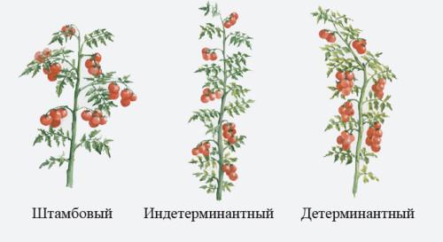 Виды формирования томатов: (штамбовый, индетерминантный, детерминантный)