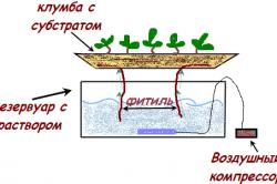 Фитильная система гидропоники