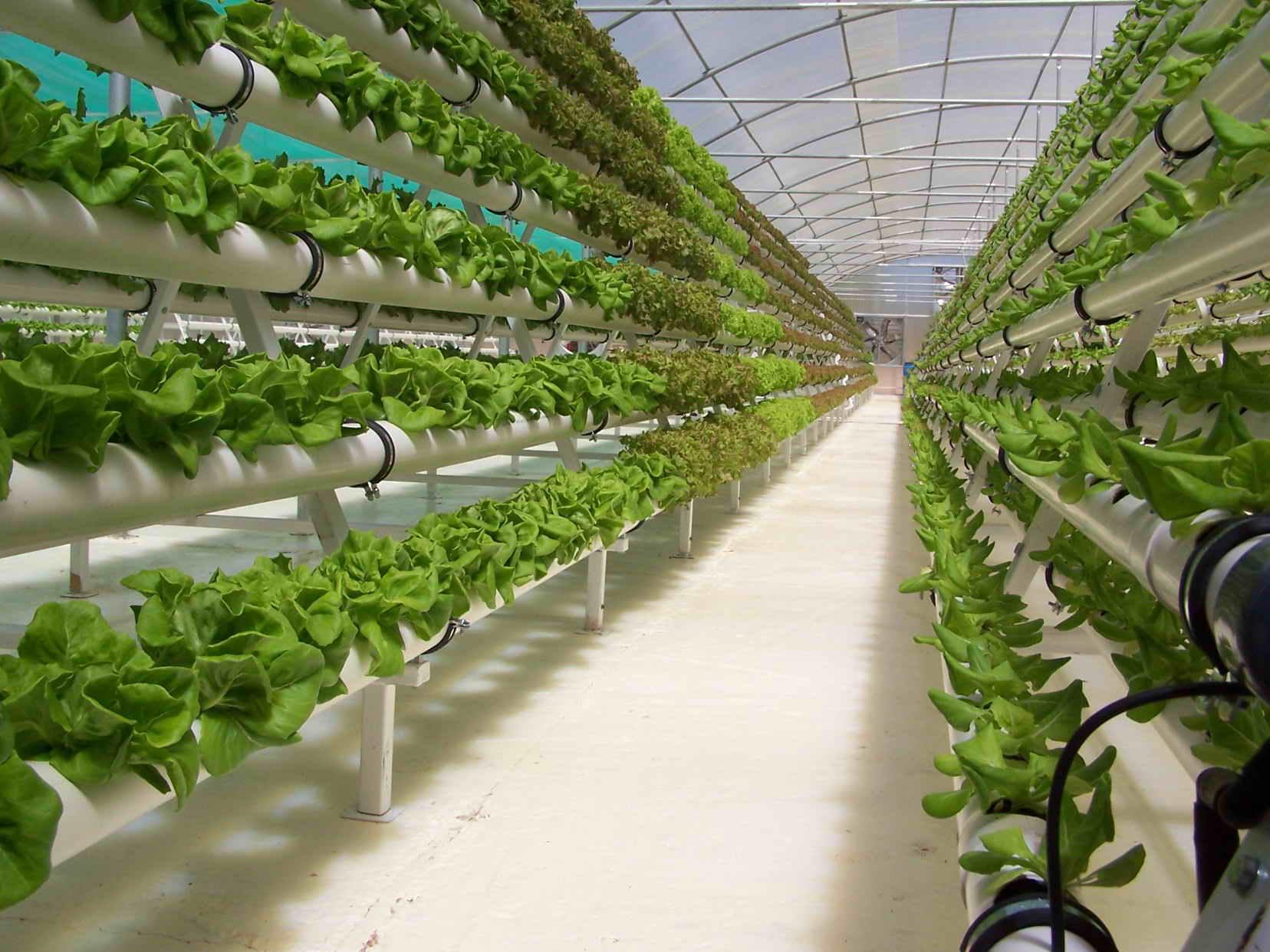 Выращивание зелени в домашних условиях гидропоника гидропоника выращивание марихуаны дома