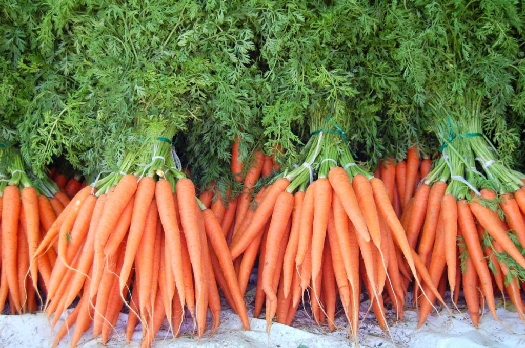 Урожай моркови