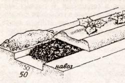 Схема удобрения огурцов навозом