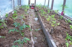 Грядки под помидоры должны быть выше уровня земли на 15-20см.