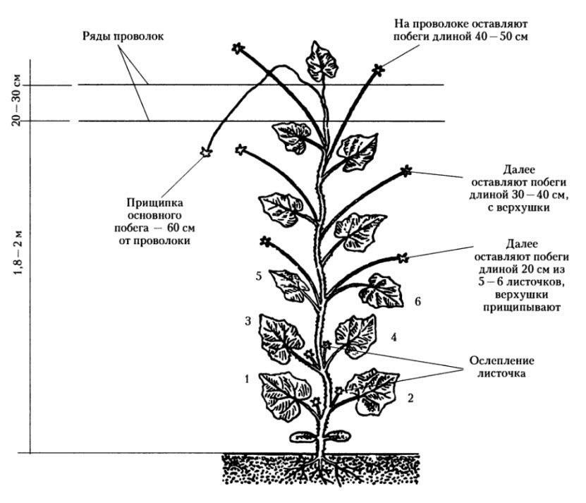 Обрезка и формирование огурцов в теплице | огород | pinterest.