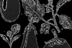 Внешний вид баклажана