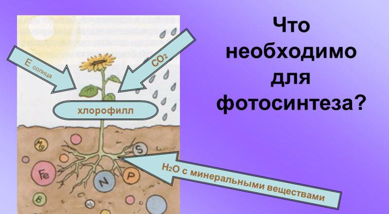 что необходимо растению для фотосинтеза собрали галерею кадров
